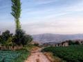 suxneh-farms